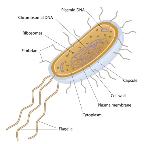 Single cell bacterium example
