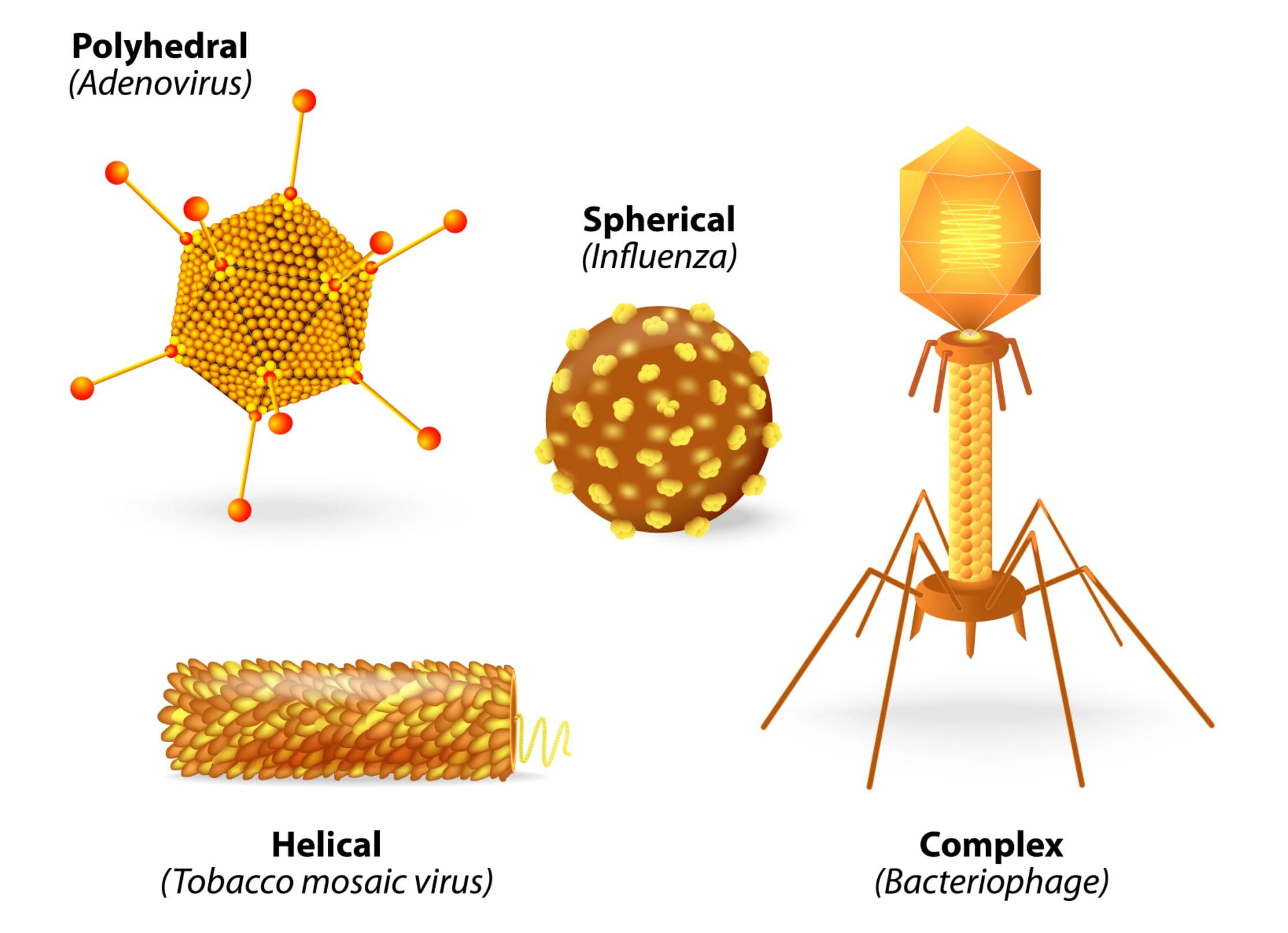 Virus shapes